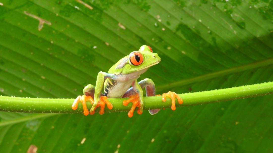 frog-110